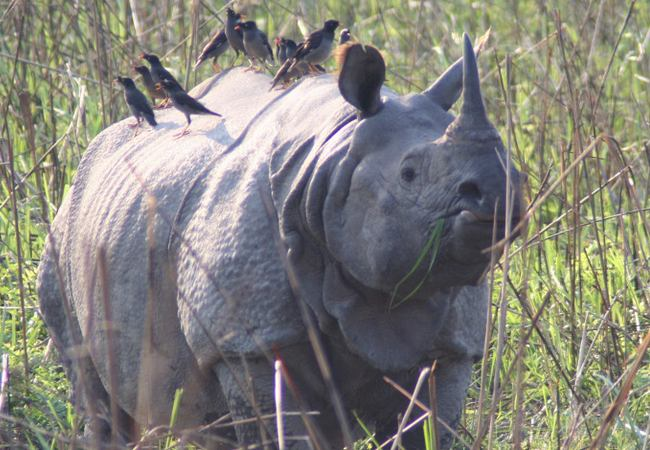 essay on kaziranga national park